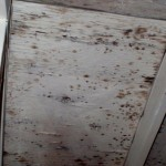 Rooftop Deck Coatings_moldy plywood